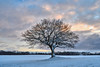 The cold and the snow (mechanicalArts) Tags: tree winter snow baum schnee sunset sonnenuntergang field feld