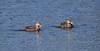 01-14-18-9342 (Lake Worth) Tags: animal animals bird birds birdwatcher everglades southflorida feathers florida nature outdoor outdoors waterbirds wetlands wildlife wings