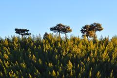 Summit Trees (cengizskpl) Tags: turkey toroslar mountain green trees forest sky sun nikon7200 1855 nikon blue akdeniz grouptripod nature