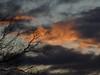 ¡Oh cielos! 156. (bego vega) Tags: ¡ohcielos cielos sky nubes clouds amanecer sunrise madrid vf bego veguita árbol tree vega bv begovega jardín robinia