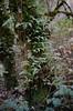 foreground/middleground/background (losthalo) Tags: foreground middleground background trees wetlands foliage intermingled livingthings pentaxart itsnotacapture fuji superia smcpm50mmf14