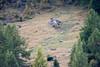 DSC_5274-1 (d90-fan) Tags: österreich austria salzburgerland raurisertal kolmsaigurn herbst alpen nationalpark hirsch hirschkuh hirschbrunft deer animal nature tiere natur