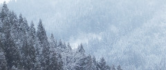 Middle of Winter (jasohill) Tags: 2018 dream adventure warm winter blend nature photography abstract lights conceputual cold fog japan mind