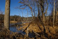 Sterling Forest State Park_0096 (smack53) Tags: smack53 sterlingforestpark newyork rocklandcounty trees lake pond water winter wintertime winterseason nikon d100 nikond100 scenery landscape