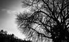 Contrasto (fabiocalcaterra) Tags: contrasto natura cielo alberi rami biancoenero bw fujifilm xt20