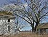 Desolate farm (LivGreen07) Tags: deserted farm building house barn tree grass sky sumac