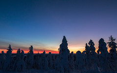 Lapland sunset (Mathieu Pierre) Tags: lights lapland canon 7dmark2 7dmarkii sigma14mmf18 sunset trees winter nature frost arctic hill finland nuit night sky snowytrees