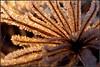 Vereistes (Barbara Wenzel-Winter) Tags: makrowelten eismakro gefroren vereist pflanzen eisgebilde gegenlicht sonnenaufgang gefrostet rauhreif abstrakt