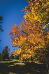 (c) Wolfgang Pfleger-8493 (wolfgangp_vienna) Tags: niederösterreich loweraustria austria österreich schneeberg schneebergland herbst autumn colorful bunt wald wiese blue blau blauerhimmel