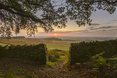 Sunrise over Bradgate Park (John__Hull) Tags: bradgate park sunrise old john wood charnwood leicestershire dry stone wall trees landscape view nikon d3200 sigma 1020mm ferns bracken woods clouds sky