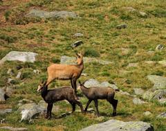 Casolari di Money - 12 (antonella galardi) Tags: aosta valle valdaosta 2017 montagna trekking sentiero escursione escursionismo cogne valnontey casolari money