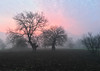 A pink glow behind the trees (VillaRhapsody) Tags: pink sunrise dawn kayaköy winter fethiye morning beautiful colours colourful surreal tree trees bare field rural village turkey