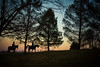 horse girls (Jen MacNeill) Tags: nature jennifermacneill evening twilight night horse horses rider riders sunset silhouette trees tree