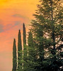 Sunset in San Jose, California. Digital Watercolor (randyherring) Tags: sanjose ca california sunset outside peaceful nature natural light scenic sunlight beautiful beauty evergreen treesandsky sunsetclouds sunsetsky sunsetbackground scene outdoor beautifulsky scenery outdoors