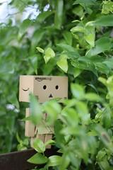 IMG_1413 (SethDanbo) Tags: danbo danboard danbox cardboard cardbox danbolove leaves green robot actionfigure