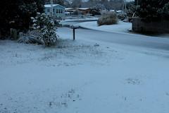 Snow Day (Mïk) Tags: mikeyworld snow feb202018 ½inchofsnow frontyard