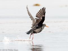 _DS57109.jpg (WaterDragon3) Tags: longreef birds