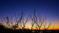 Desert (ricardopardie123) Tags: desert light view godscreation tree sunset night dark blue yellow landscape planet forest sky moon black nature grass
