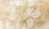 HydrangeA (Kambo Dscha) Tags: hydrangea flower white nikon kambodscha