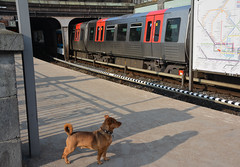 Waiting for the subway (VreSko) Tags: hamburg hh deutschland germany dog dogs hunde hund perro ubahn tube underground metro