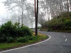 Day 4 - Wayanad - Winding Roads