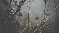 PB_012618_26 (losing.today) Tags: brianyoung oregon pacificnorthwest portland pdx portlandoregon portlandor winter nature outdoors naturepark plantlife plants moodyseason darkseason losingtoday