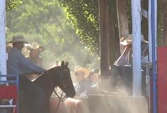waiting (tom.edwards1974) Tags: rodeo myrtleford victoria australia summer cowboy horse landscape color tree sun light man athlete sport myth
