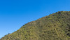 IMG_5934 (jaglazier) Tags: 121417 2017 andes copyright2017jamesaglazier december deciduoustrees ecuador pichincha quito trees cloudforest forests landscapes mountains distritometropolitanodequito