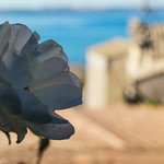 Sea Flower 3 - Anguillara Sabazia thumbnail