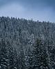 Snowy times (ekidreki) Tags: blue sky cold sarajevo bosnia bjelasnica winter wonderland snow snowy tree trees snowcapped balkan balkans sonyalpha sony a7r3 a7rm3