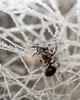 Frozen Web (Sigurd R) Tags: ant asker frost frozen macro norge norway rim spiderweb web akershus no