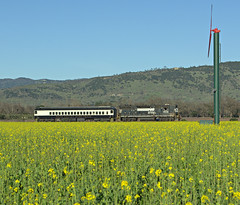 NS on Napa Valley (ryanclark13) Tags: wine winetrain travel mustard nikon photo field landscape