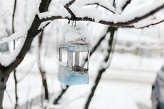 Birds-time (DENIS-KA) Tags: canon eos 6d birds snow winter ef40stm kyiv