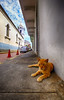 Cool Cat in Panama City, Panama (` Toshio ') Tags: toshio panama panamacity cascoviejo cat feline animal oldtown sidewalk street church city perspective centralamerica clouds fujixt2 xt2 cars cones churchtower shade straycat