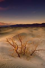 DSCF5708.jpg (Graeme Tozer) Tags: california mesquiteflatdunes sand landscape sunset sanddunes usa deathvalley desert deathvalleynationalpark