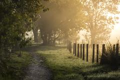 Path of light (Bertrand Thiéfaine) Tags: 2017 d750 automne brume leverdujour maraisdegrée matin nature sigma150f28 lumière raisdelumière rayons clôture prairie arbres feuillage chemin bokeh