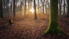 Lightspot (Sebo23) Tags: forest wald licht lichtstimmung light landscape landschaft lightbeam backlight gegenlicht lichtschatten nature naturaufnahme natur canon6d canon16354l