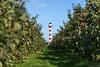 Altes Land-1167 (Tiedeblick) Tags: altesland erntezeit herbst leuchtturm