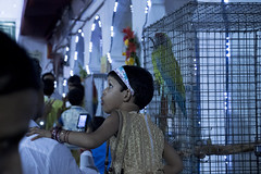(Flora Eiffel) Tags: india inde calcutta kolkata rue street nuit night perroquet enfant bleu blue canon80d canon lady oiseau bird parrot celebration surprise