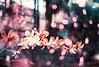 Garden Mist (Hayden_Williams) Tags: film analog analogue doubleexposure multipleexposure bokeh depthoffield dof orchid flowers flower flowergarden garden purple violet lomography lomo lomochromepurplexr100400