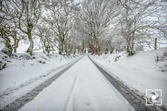 Winter morning (W.G. Photography) Tags: winter morning northernireland coantrim road snow