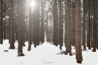 Dalby Forest, North Yorkshire
