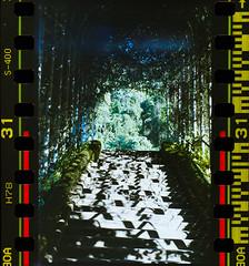Fujicolor Superia X-Tra 400 #NikonFM #Fujicolorsuperiaxtra400 #Filmphotography (ruckyletsrockBS) Tags: nikonfm fujicolorsuperiaxtra400 filmphotography