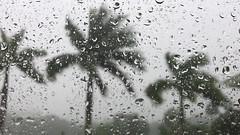 It is Raining It is Pouring (soniaadammurray - Off) Tags: video rain trees sky raindrops window pool pooldeck thunder thunderstorm weather nature