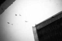 breaking out of geometry, series (Neko! Neko! Neko!) Tags: blackandwhite blackwhite bw mono monochrome geometry reality life sky escape emotion feeling illusion expression expressionism pinhole