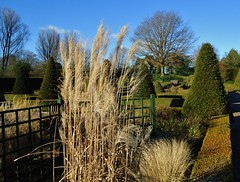 Winter sunlight in the Gardens (Eddie Crutchley) Tags: europe england cheshire bridgemere outdoor gardens blueskies simplysuperb sunlight nature beauty trees winter pampasgrass greatphotographers