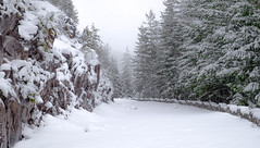 Ricksecker Point Road (rich trinter photos) Tags: mountrainier winter packwood washington unitedstates us rickseckerpointroad landscape trinterphotos storm road monochrome