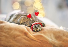 Love (City Turtles) Tags: prop accessory depth headband happiness relaxing feature photo photography vsco flickr tones bokeh lights indoors miniatures love sleep heart living reptile animal cute pet turtle