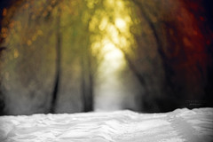 on the winter trail ... (mariola aga) Tags: winter park trail path snow trees light shadow dof bokeh texture art coth