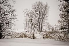 AH QUE L'HIVER TARDE À PASSER (pierre.arnoldi) Tags: pierrearnoldi canada canon6d québec sthilaire photoderue photooriginale photographequébécois hiver on1photoraw2018 neige